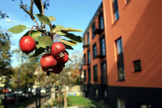 Okrasná jablíčka v okrasné zahrádce